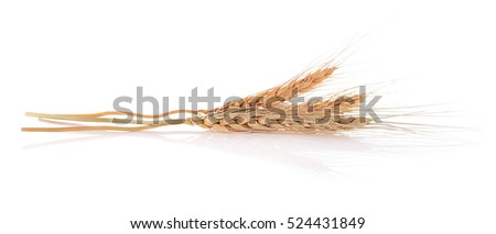 Barley ear isolated on a white background.