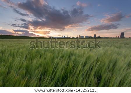 Barley field at Sunset, Salt end near Saltend Chemicals Park (Hull, UK) - stock photo