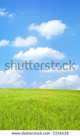 Barley field over beautiful blue sky