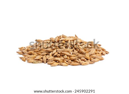 barley grain seed close up isolated on white background
