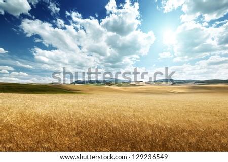 barley  hills Tuscany, Italy - stock photo