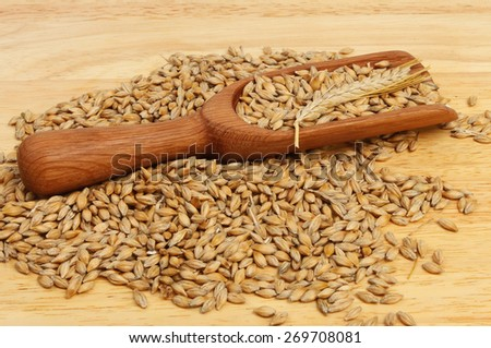 Barley in and around a wooden scoop on a wooden board - stock photo