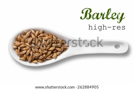 Barley in white porcelain spoon / high resolution product photography of cereal in white porcelain spoon over white background with place for your text - stock photo