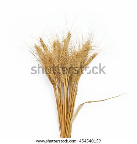barley isolated on white