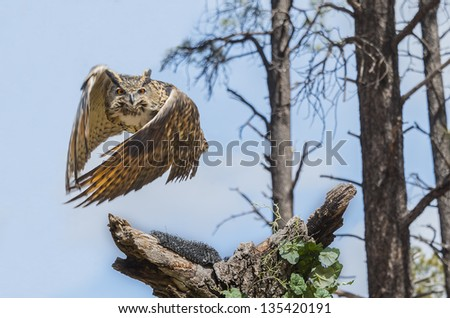 Barn Owl Perched On A Tree Stump - stock photo