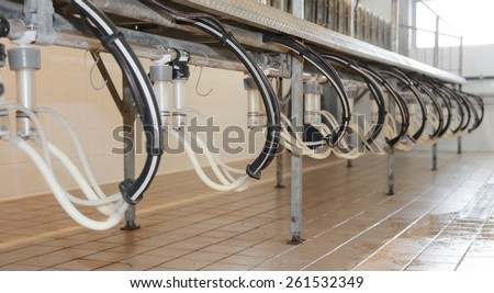 barn with automatic milking goats and sheep in the farm - stock photo