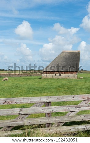 Barn with meadow and sheep on the Wadden island of Texel.