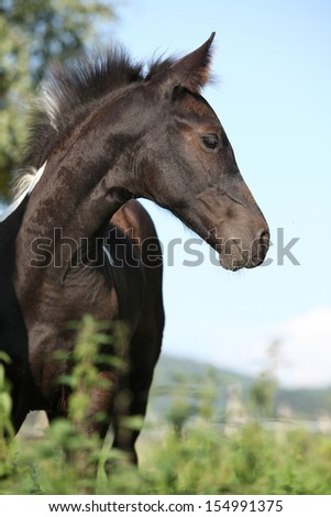 Barock pinto foal standing on green pasturage