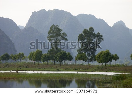 Baroque forms trees at the lake in Vietnam.