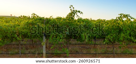 Barossa wine valley at warm summer sunset - stock photo