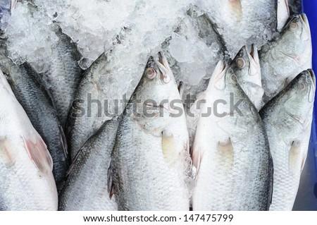 Barramundi fishing in Thailand  - stock photo