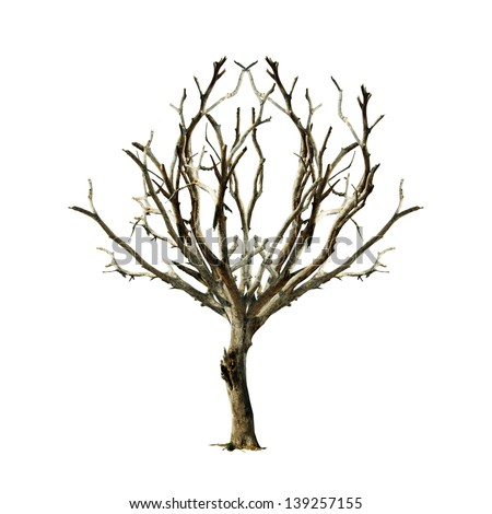 Barren tree on isolated background. - stock photo