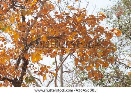 Barren trees, leaves, gold, drought, heat the atmosphere, global warming because trees.