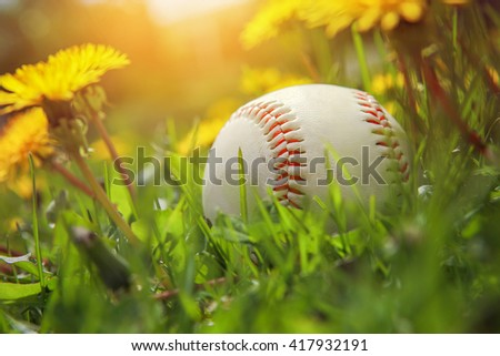 Baseball lying in tall grass and dandelions - stock photo