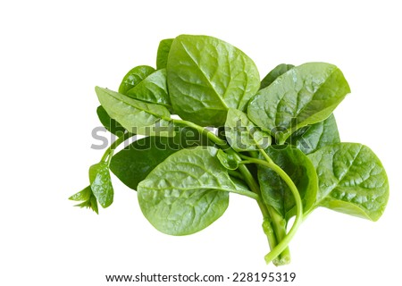 Basella Alba Malabar Spinach isolated on white background - stock photo