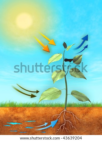 Basic photosynthesis process: water, carbon dioxide and light are used to produce oxygen and sugar. Digital illustration. - stock photo