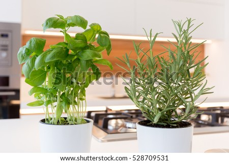 Basil and rosemary herbs in pot in the kitchen