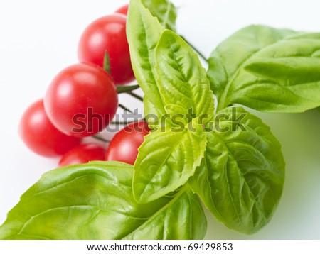 basil and tomato on a white - stock photo