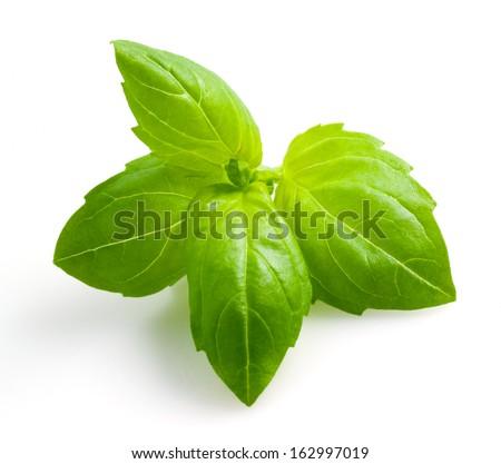 Basil isolated - stock photo