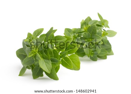 Basil isolated on the white background.