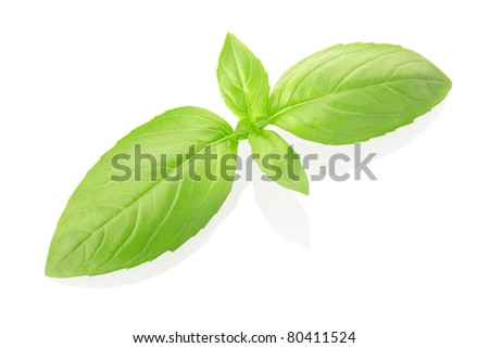 Basil isolated on white, clipping path included - stock photo