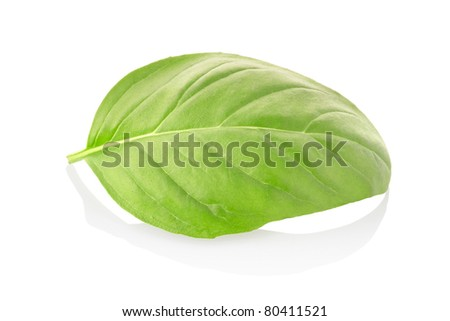Basil leaf isolated on white, clipping path included - stock photo