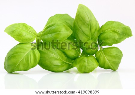 Basil leafs on white background - stock photo