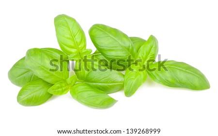 basil  leaves Isolated   on white background - stock photo