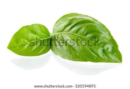 Basil leaves isolated on white background - stock photo
