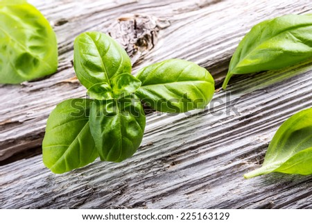 Basil leaves on a old wooden table - stock photo