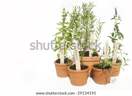 Basil, mint, lavender, rosemary and thyme potted herbs isolated against white - stock photo