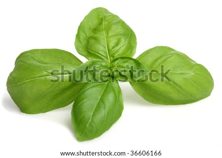 Basil on a white Background - stock photo