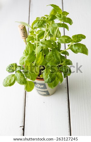 Basil plant in  pot with name tag. - stock photo