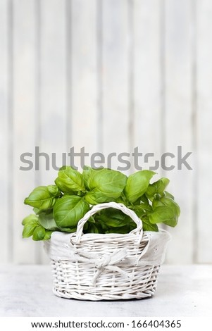 Basil plant in wicker basket on wooden table. Copy space, your text here - stock photo
