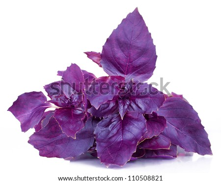 Basil purple spice, herb, taste and smell,vitamin set of greens leaves of fresh isolated on white background - stock photo