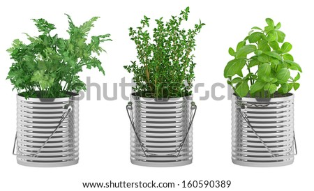 basil, thyme, parsley in the metal flower pots isolated - stock photo