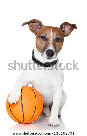 Basket ball  winner dog - stock photo