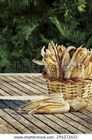 Basket empty of corn cobs in a garden environment. Green background - stock photo