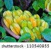 Basket fresh star apple fruit - stock photo