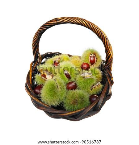 basket full of fresh ripe chestnut fruits isolated on white background - stock photo