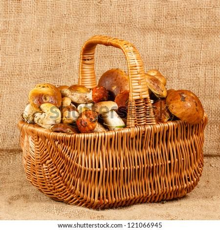 Basket full of mushrooms on a burlap background - stock photo