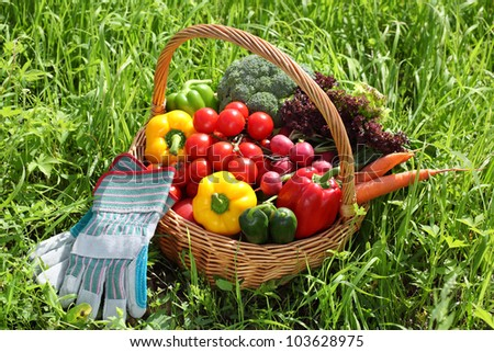 Basket full of organic vegetables with glove on green grass.