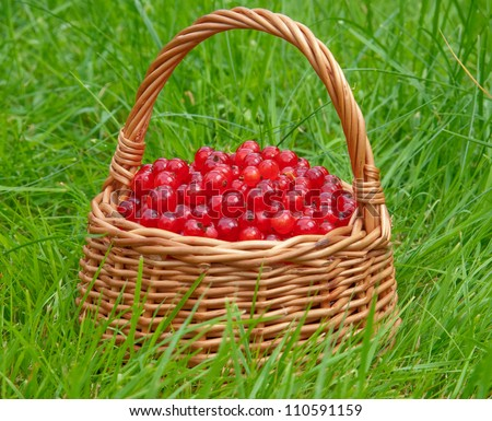 basket full of red currant berries on a green grass background