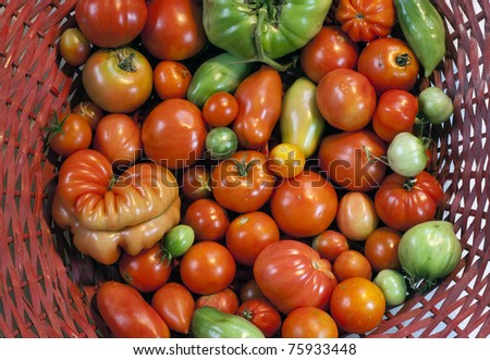 basket full of tomatoes