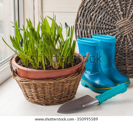 Basket growing muscari, garden shovel and rubber boots - stock photo
