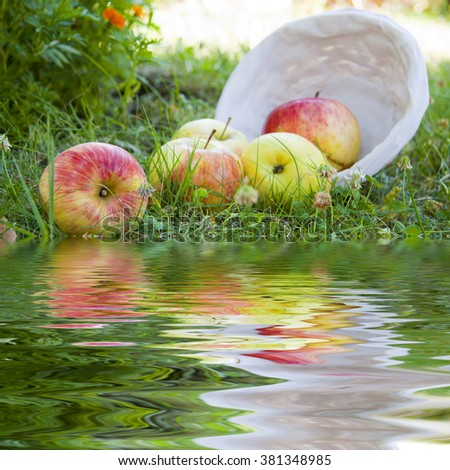 basket of apples in the field and reflection in the water - stock photo