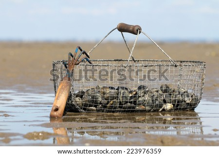 Basket of clams - stock photo