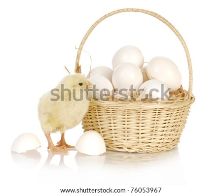 basket of eggs with newborn chick standing beside on white background - stock photo