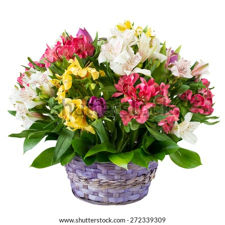 Basket of flower isolated on white