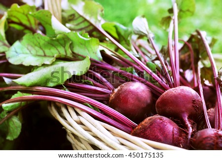 Basket of fresh harvested beets, selective focus - stock photo